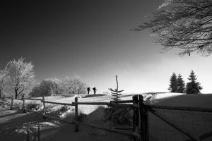 Fencing Contractors Caulfield North